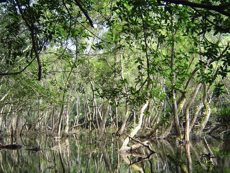 Bosque inundado en el Parque Nacional de Cat Ba