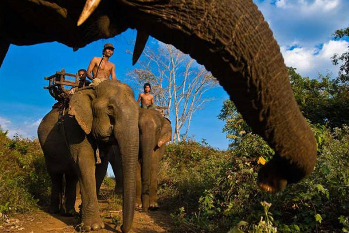 Paseo de elefantes en Ratanakiri Camboaya