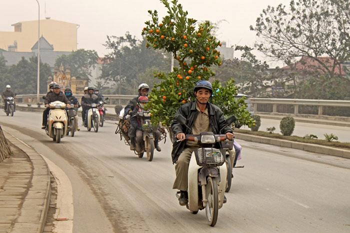 Arbol del Tet ano nuevo vietnamita
