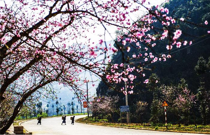Primavera en Ha Giang Vietnam