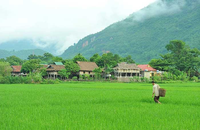 Campo en un pubelo Thai