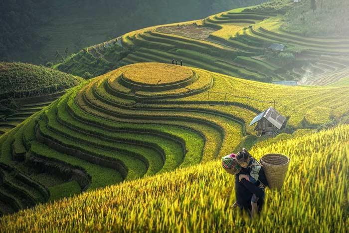 Pueblo de La Pan Tan en medio de arrozales