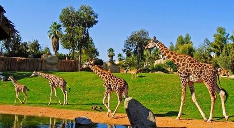 que-hacer-en-phu-quoc-safari