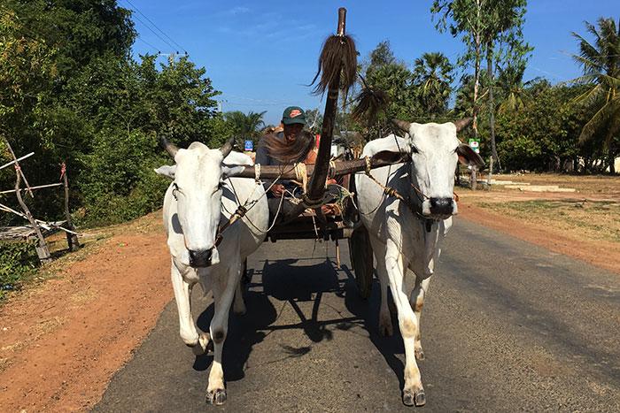 Paseo a caballo en Tralach Camboya