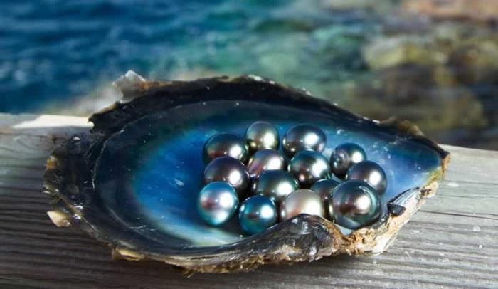 Produccion de perlas en Phu Quoc Vietnam