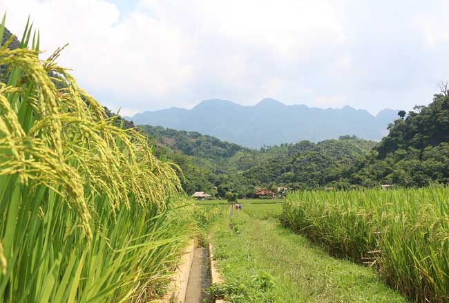 Campos en la Reserva Natural de Pu Luong