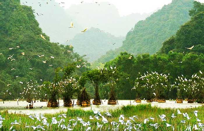 Santuario de aves en Tam Coc Vietnam