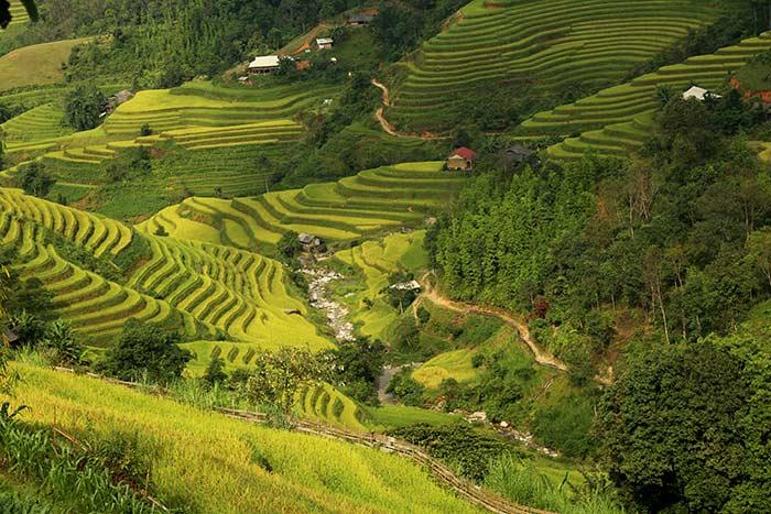 Terrazas de arroz en Hoang Su Phi Vietnam