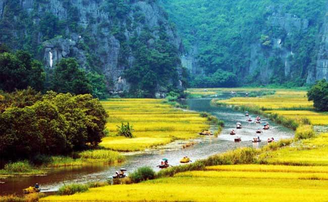 Hermosos arrozales en Tam Coc Ninh Binh