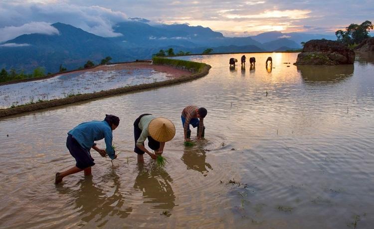 Temporada de lluvia en las terrasas de arroz de ha Giang