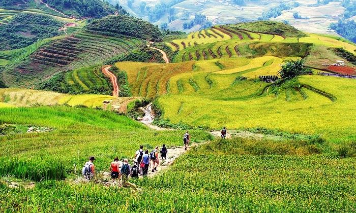 Terrazas de arroz en el valle de Muong Hoa