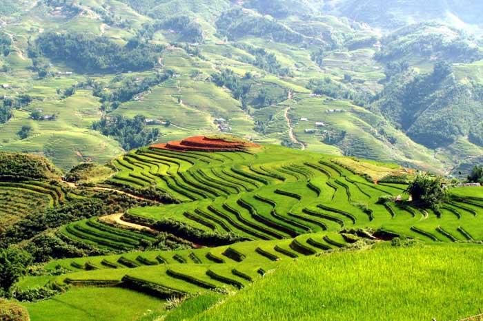 Terrazas de arroz en Mu Cang Chai noroeste de Vietnam