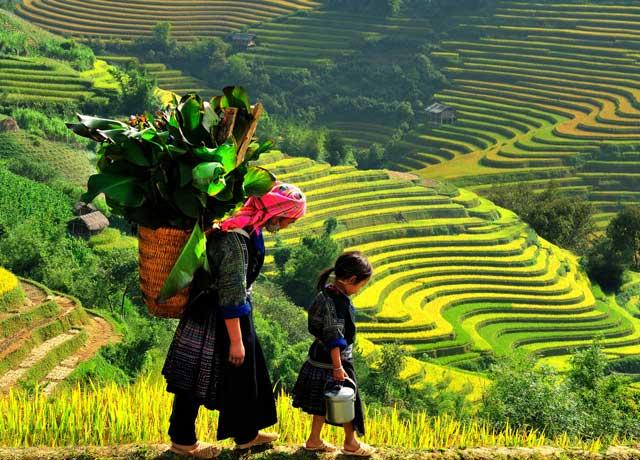 Terrazas de arroz en el pueblo de Ta Van en Sapa