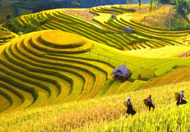 Terrazas de arroz en Sapa Vietnam