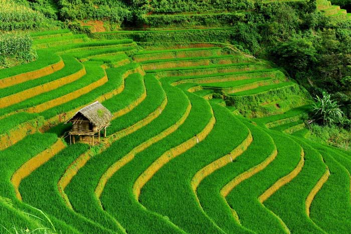 Hermosas terrazas de arroz en Sapa