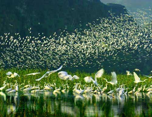 Santuario de aves en Thung Nham Ninh Binh