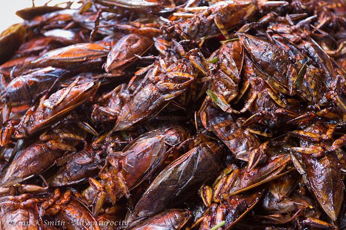 Insectos fritos en Camboya