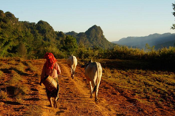 Trekking en Birmania campo de pindaya