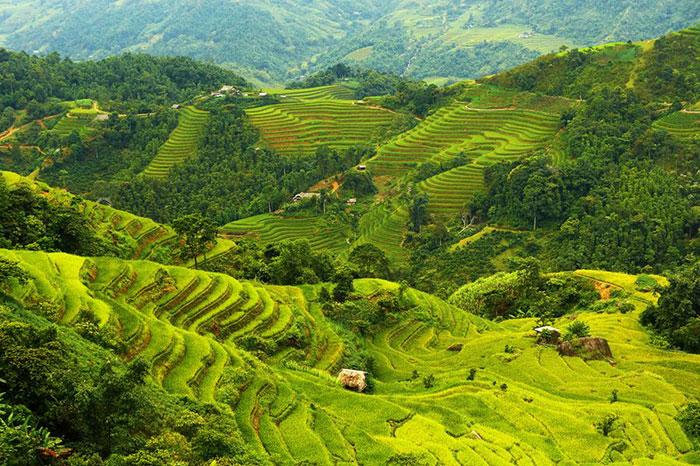 Arrozales en el norte de Vietnam