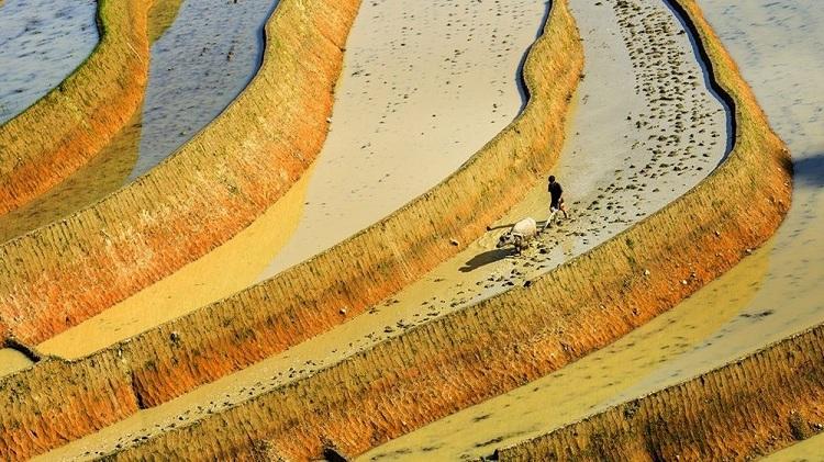 Trabajo en el campo de las terrazas de arroz en Ha Giang