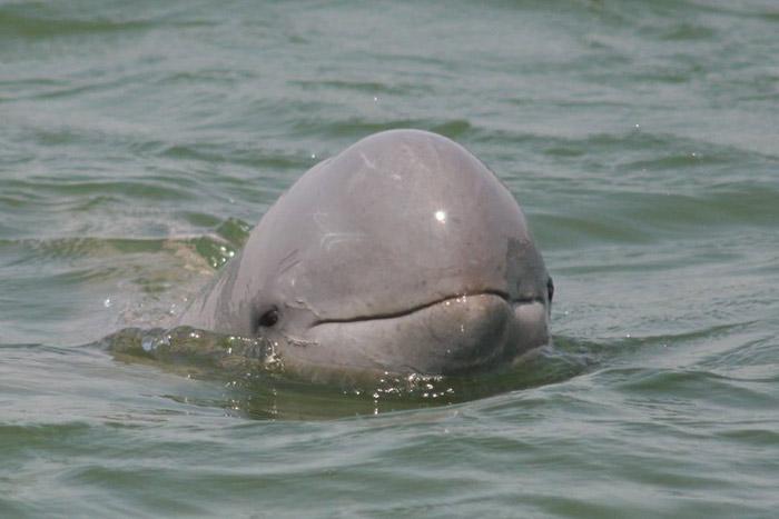 Observa los delfines de agua dulce en Kratie  para pasar unas buenes vacaciones familiares en Camboya