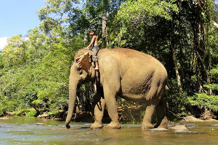 Conoce a los elefantes para pasar unas buenes vacaciones familiares en Camboya