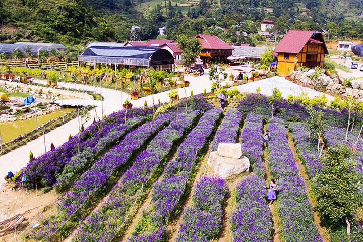 Valle de flores en Bac Ha Vietnam