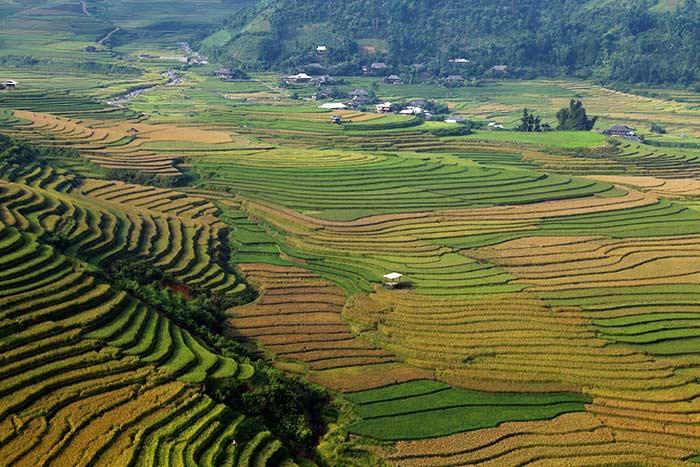 Valle de Tu Le en Mu Cang Chai