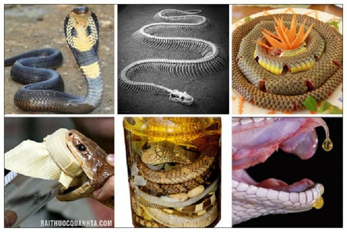 Veneno de serpiente en Vietnam