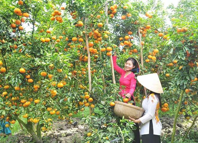 Viajar a Vietnam en agosto Delta de Mekong