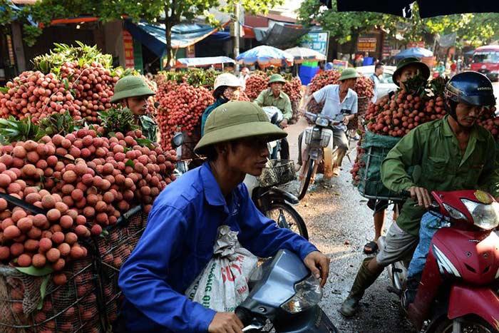 Consejos para viajar a Vietnam en mayo y junio venta de lichis