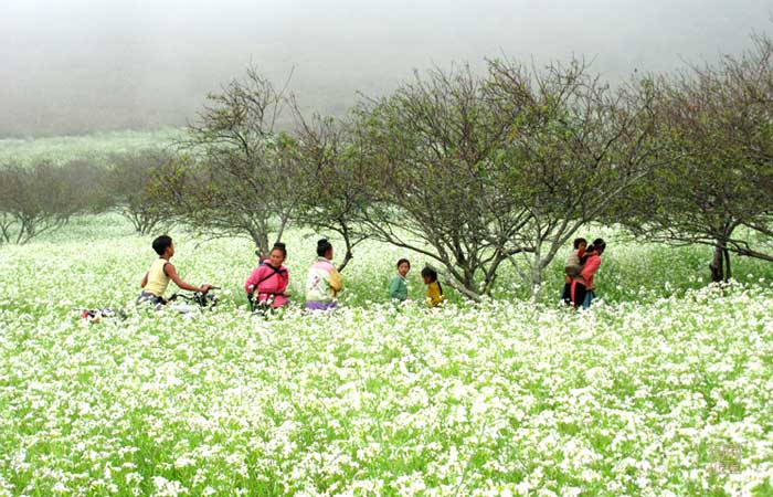 Viaje de boda en Moc Chau Vietnam