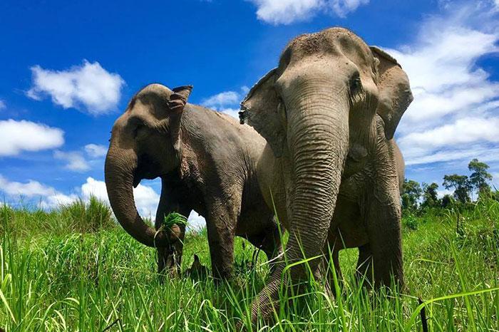 Viaje solidario a Camboya con elefantes