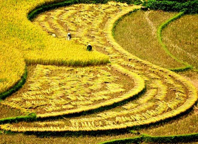 viaje-a-vietnam-agosto-sapa