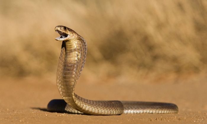 Serpiente en Vietnam