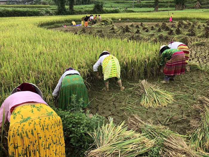 Agricultores en Ha Giang Vietnam