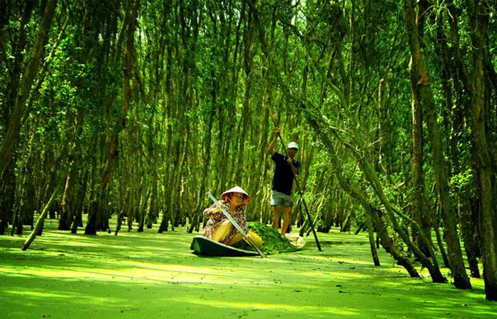 Bosque de cajeput en Chau Doc Vietnam