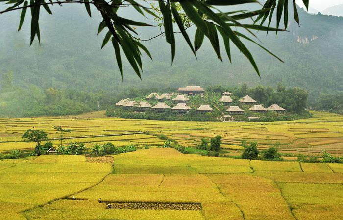 Arrozales en Mai Chau Vietnam guia de viaje