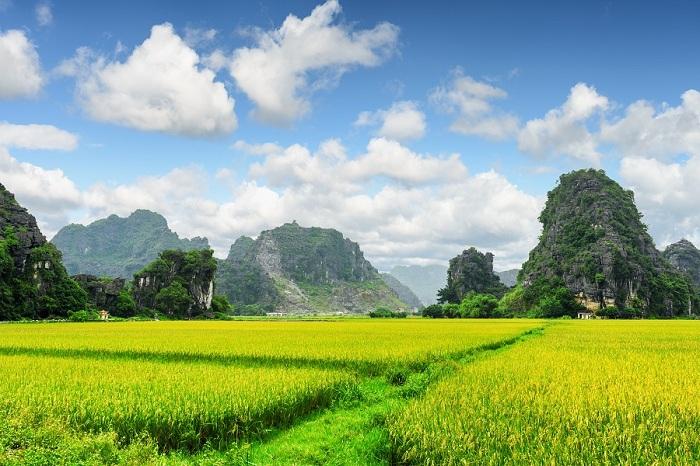 Terrazas de arroz en Tam Coc Ninh Binh