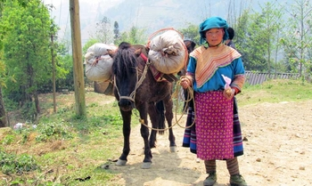 Bac Ha – Sin Man (D/A/C)